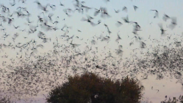 bat-swarm-ken-kerbs-promo.jpg