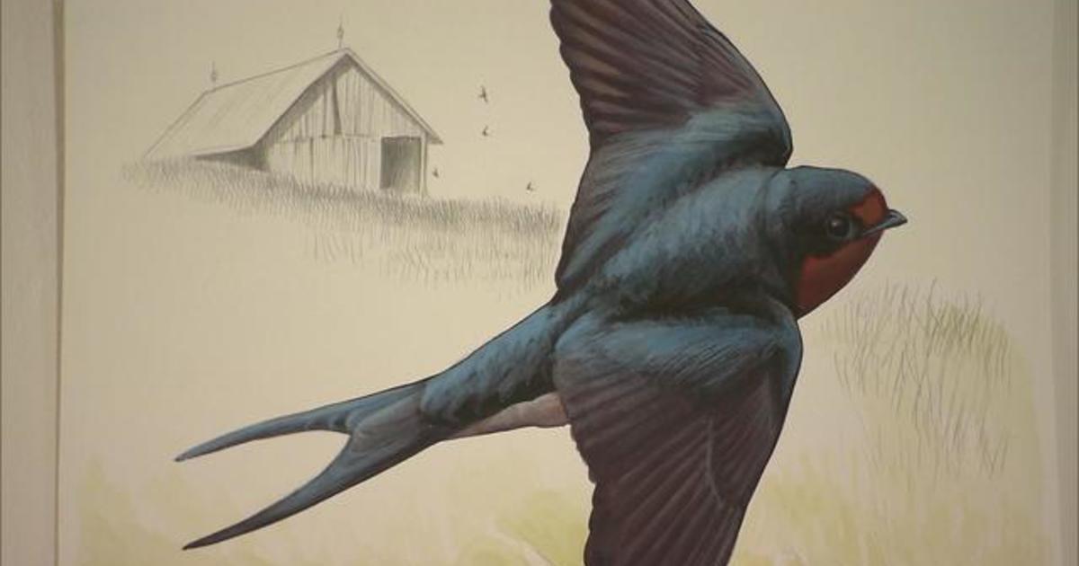 Artist David Sibley: For the birds