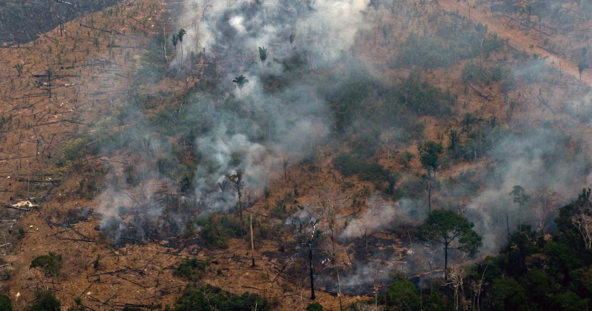Deforestation in Brazil's Amazon rainforest is highest since 2008