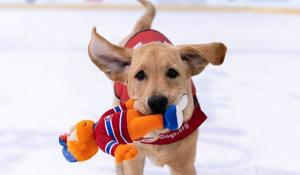Washington Capitals puppy will soon get his shot as a service dog