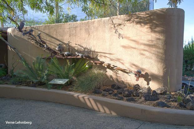 evolution-wall-arizona-sonora-desert-museum-verne-lehmberg-620.jpg
