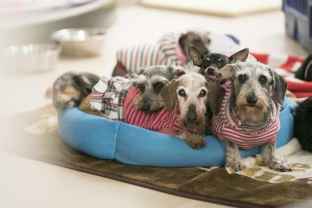 japan-shelter-dogs.jpg
