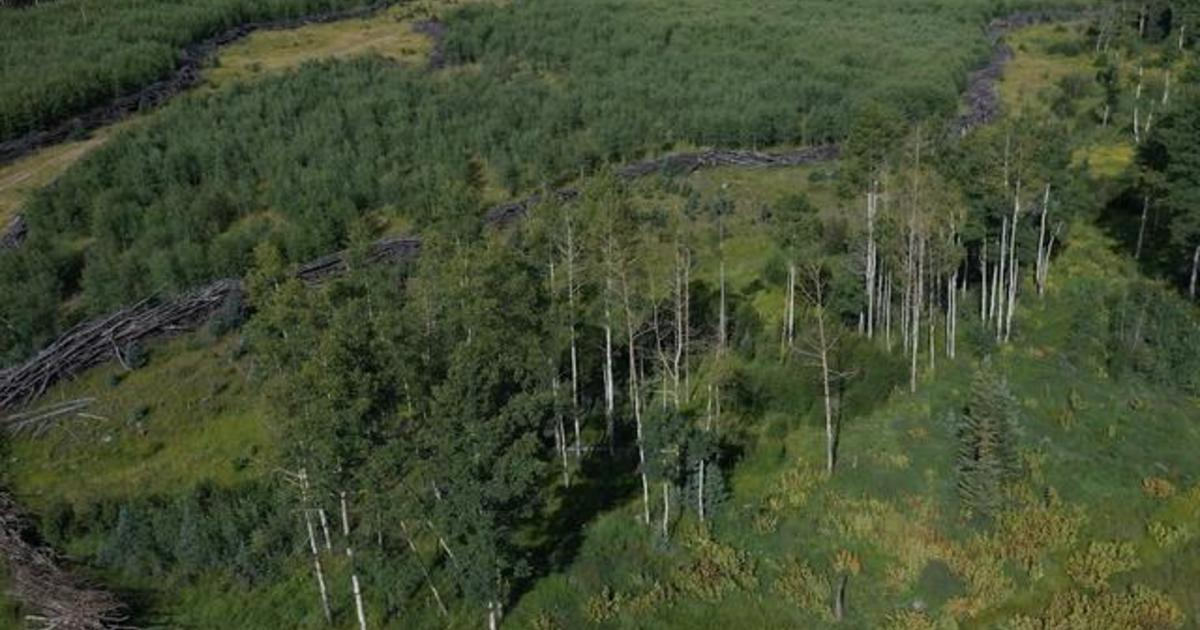 Innovators have come up with a way to clear forests without setting fires