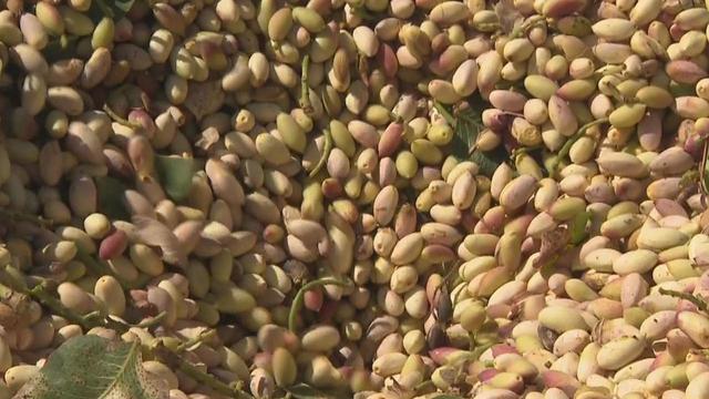 pistachios-promo.jpg