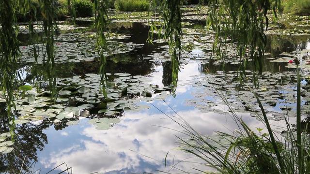 nature-monet-garden-2010375-640x360.jpg
