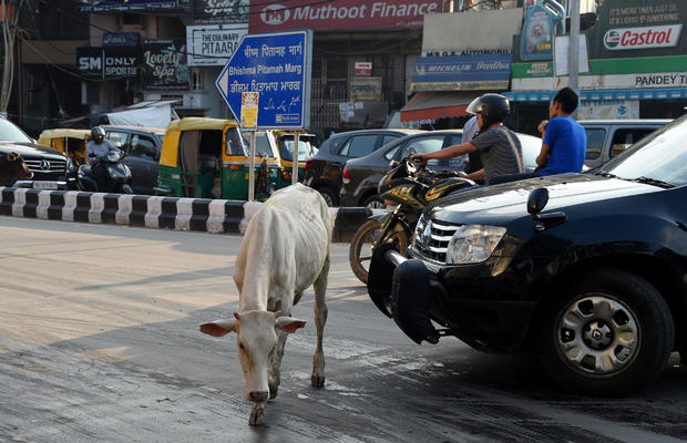INDIA-COWS-ANIMAL-RELIGION