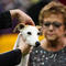 A whippet named Bourbon is judged at the 2020 Westminster Kennel Club Dog Show at Madison Square Garden in New York City,