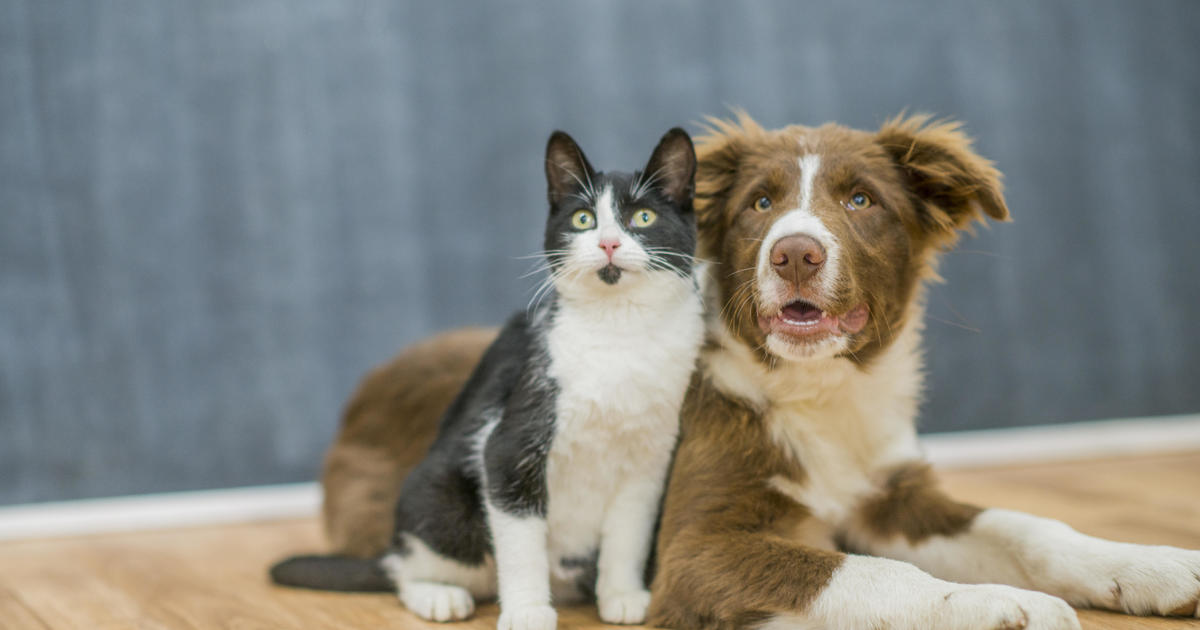 Coronavirus outbreak results in uptick in foster pet functions thumbnail