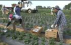 us-farmers-coronavirus.png