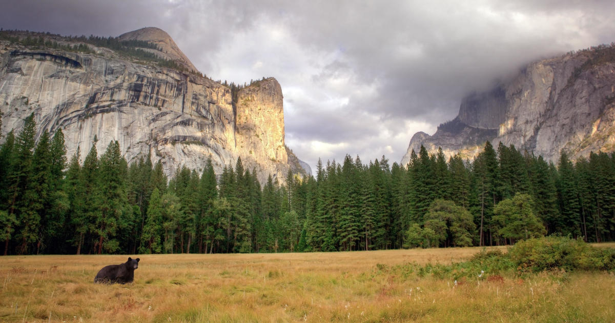 to Yosemite Now, visitors. National bears is closed Park