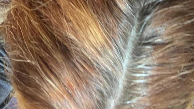 faioth-salie-hair-gray-620.jpg
