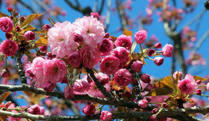 sm-xx-nature-flowers-050220-forweb0-2061087-640x360.jpg