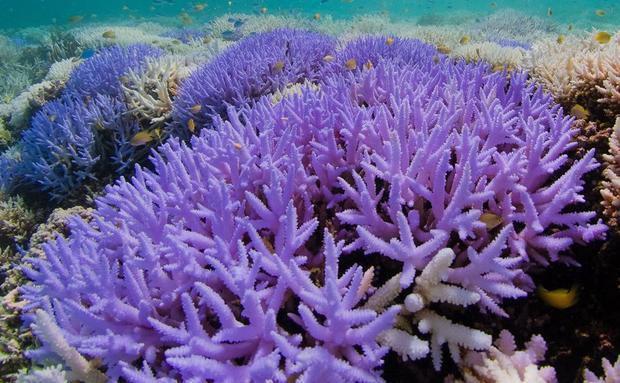 Richard Vevers/The Ocean Agency/XL Catlin Seaview Survey