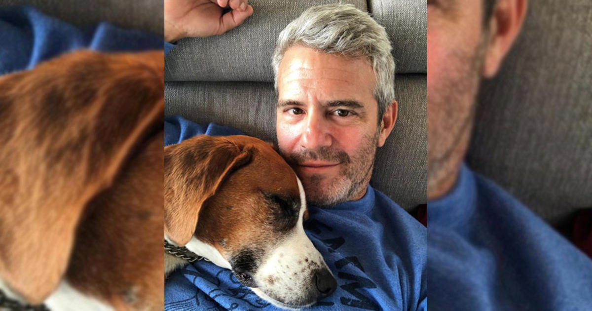 """Andy Cohen reveals he gave his rescue dog Wacha away, because keeping him could have been """"catastrophic"""" for his son"""
