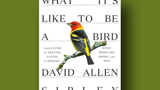 what-its-like-to-be-a-bird-knopf-cover-promo.jpg