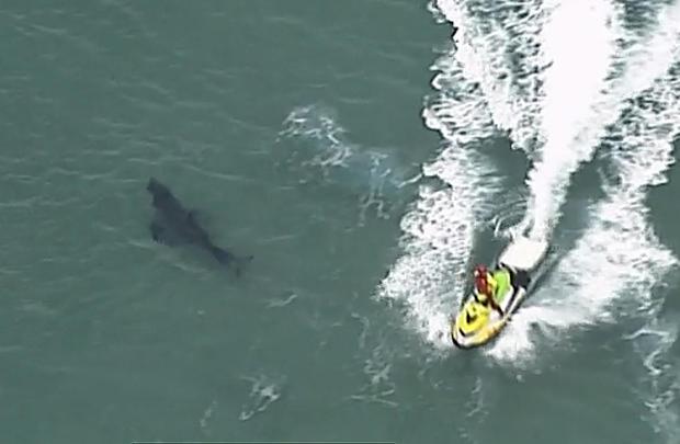 Australia Fatal Shark Attack