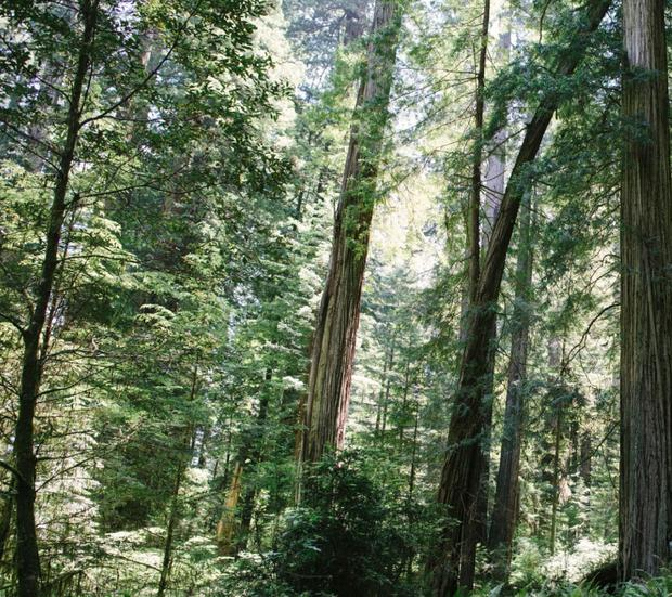 redwood-np.jpg