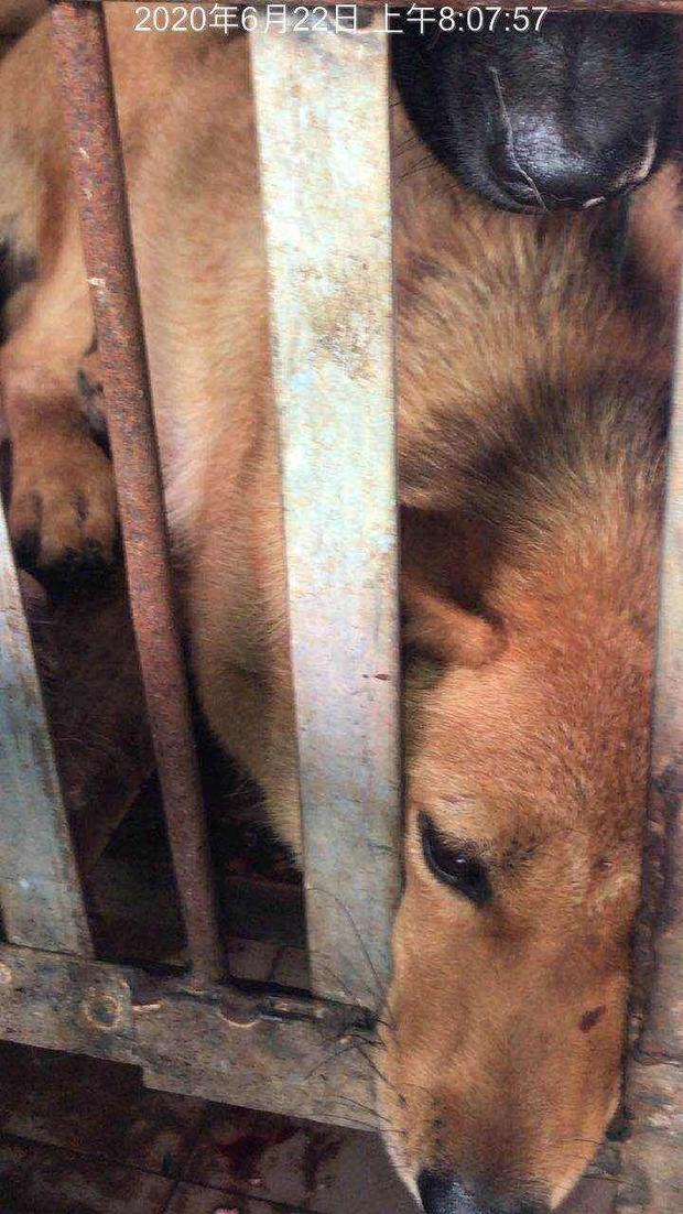 china-dog-meat-festival-cages.jpg