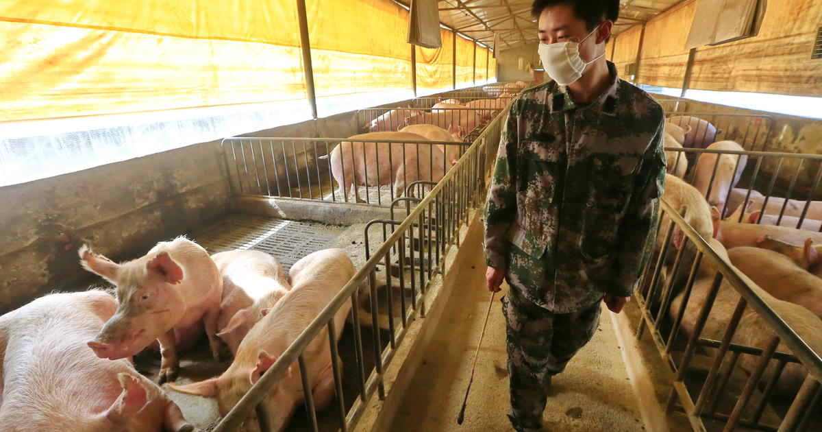 New swine flu in China could morph to cause human pandemic, study ...