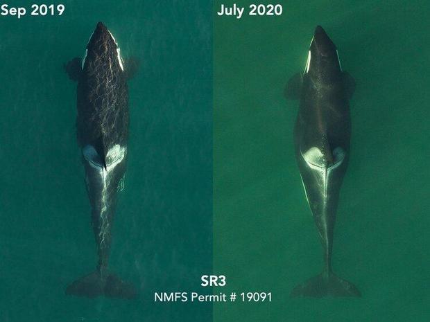 pregnant-whale-photo-july-2020.jpg
