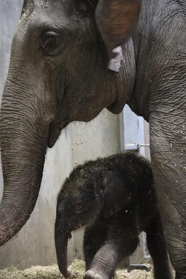 rani-and-asian-elephant-calf-madi-culbertson.jpg