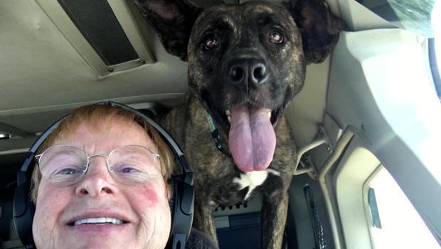 peter-rork-dog-is-my-copilot-620.jpg