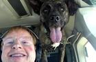 dog-is-my-copilot-passenger-1920.jpg
