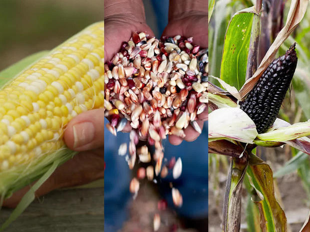 corn-colors-1280.jpg