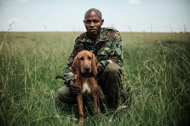 KENYA-NATURE-WILDLIFE-POACHING