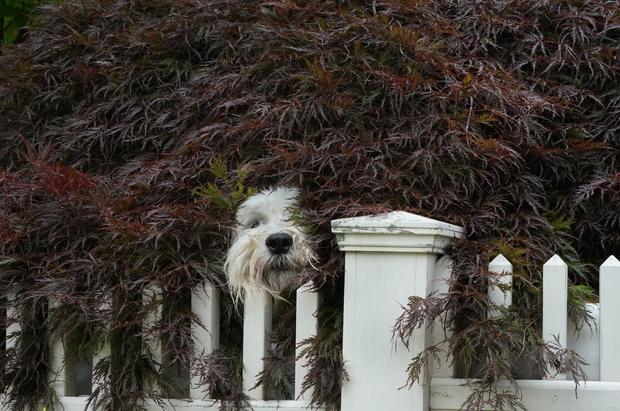US-FEATURE-DOGS-OFFBEAT