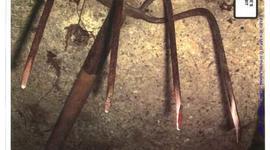 Evidence in the Amy Mullis corn rake murder case