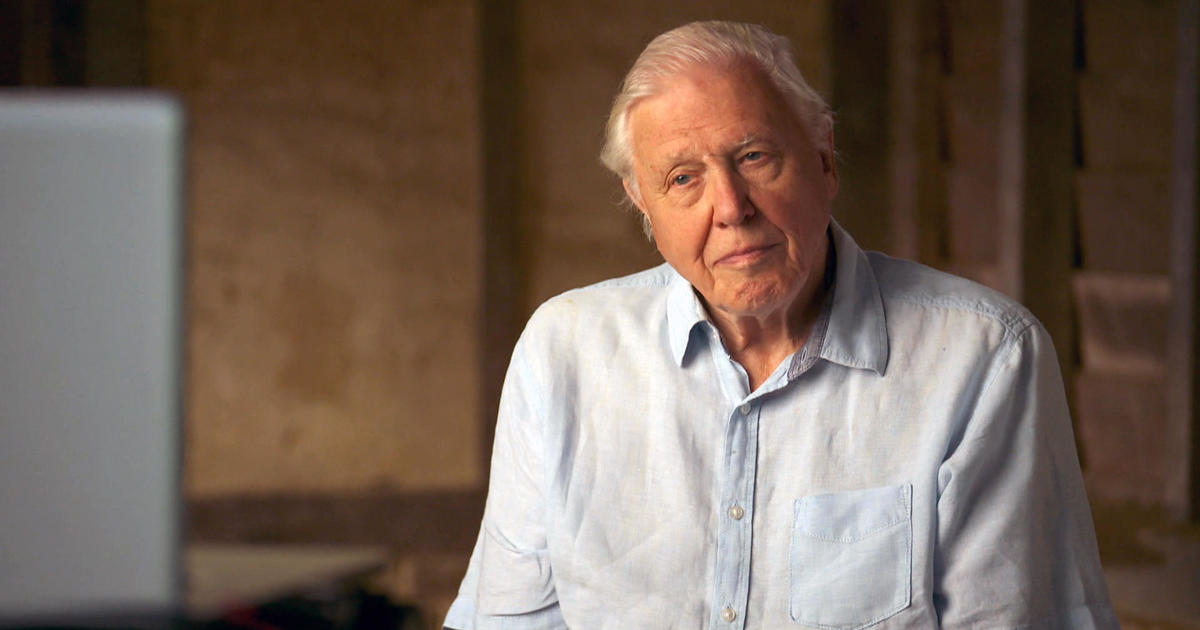 Sir David Attenborough explains what he thinks needs to happen to save the planet