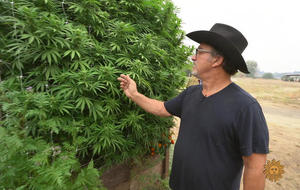 jimbelushi-cannabis1920-555016-640x360.jpg
