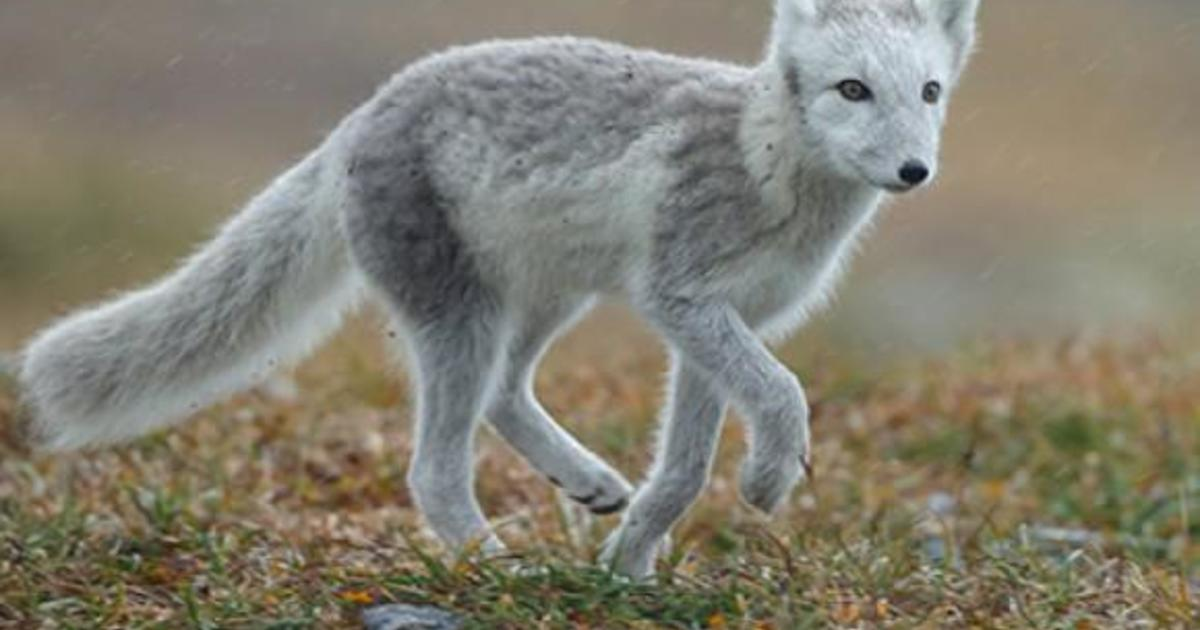 Nordstrom To Stop Selling Fur And Exotic Animal Skin Products Cbs News