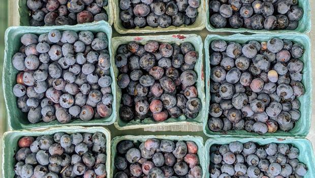 blueberries-620.jpg