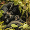 Family of mountain gorillas seen resting at the Bwindi