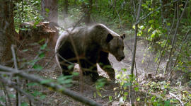 Coexisting with grizzlies in Montana