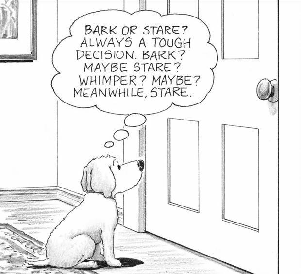 cartoon-dog-620.jpg