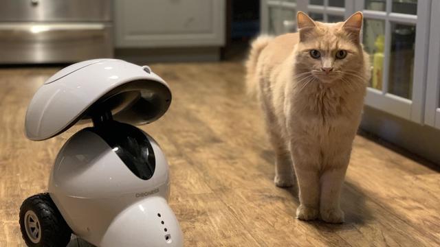 dogness-smart-pet-robot-reveiw.jpg