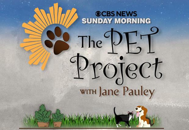 pet-project-logo-640.jpg
