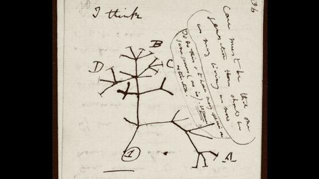 darwin-tree-of-life.jpg