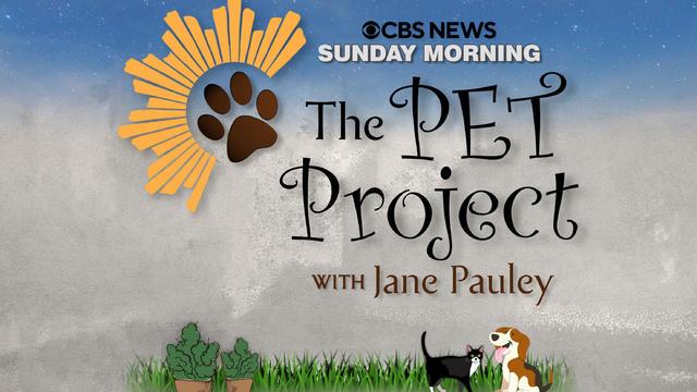 pet-project-2.jpg