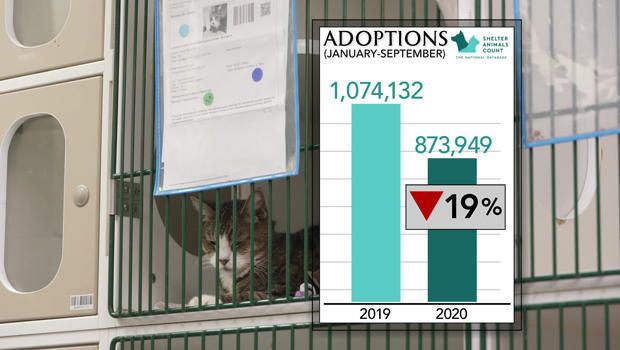adoptions-graphic-620.jpg