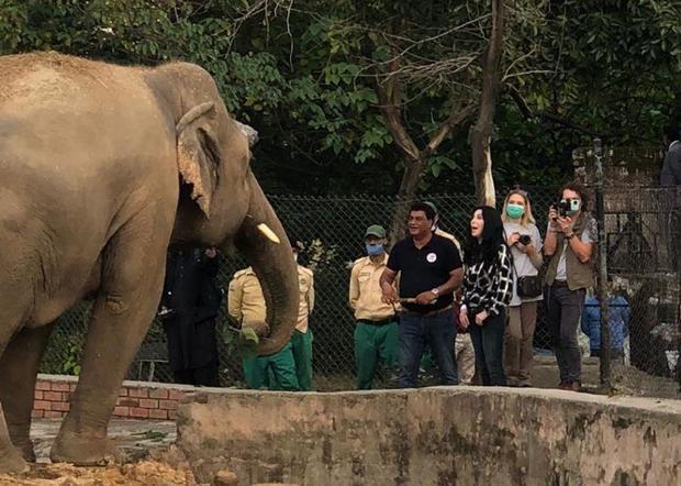 cher-kaavan-elephant.jpg