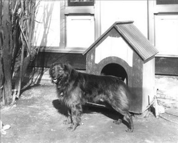 Dash and Dog House at White House