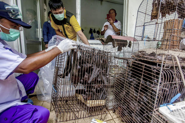 Virus Outbreak Animal Origins