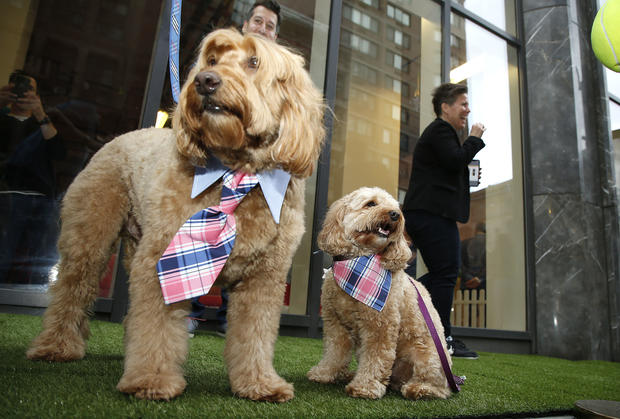 Dogville Launches Interactive Pop-Up For Pups In New York City