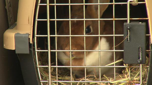 bunny-620.jpg