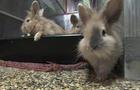 bunnies-1280.jpg