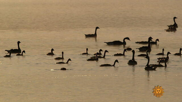 montanabirdsb1920-684838-640x360.jpg